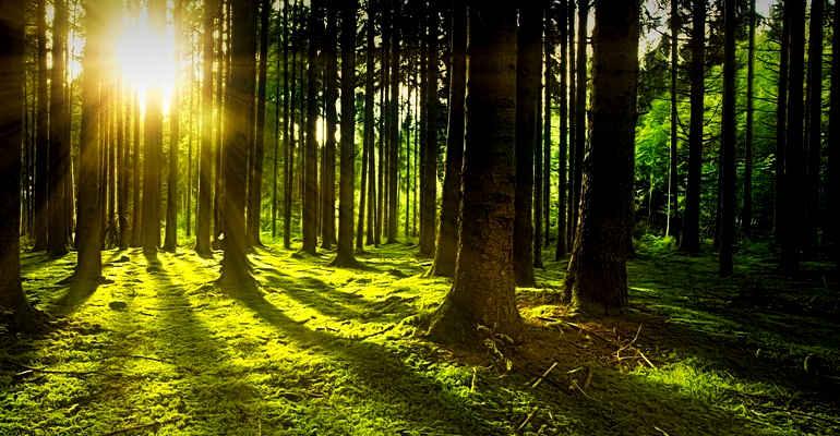 """Corso """"Le foreste: patrimonio da salvaguardare e valorizzare"""""""